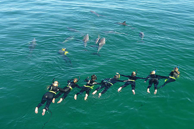 Swim with Dolphins in Australia