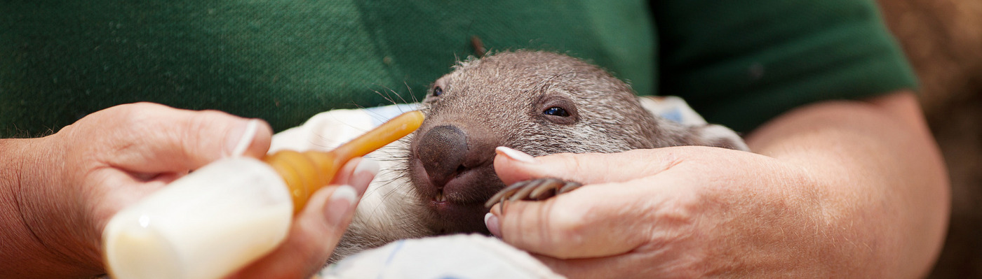 Wild Animal Rescue, Rehabilitation and Conservation in NSW, Australia