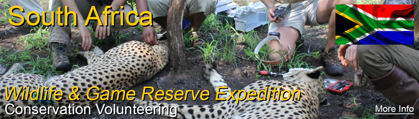 Amazing Wildlife Conservation project in South Africa with Travellers Worldwide